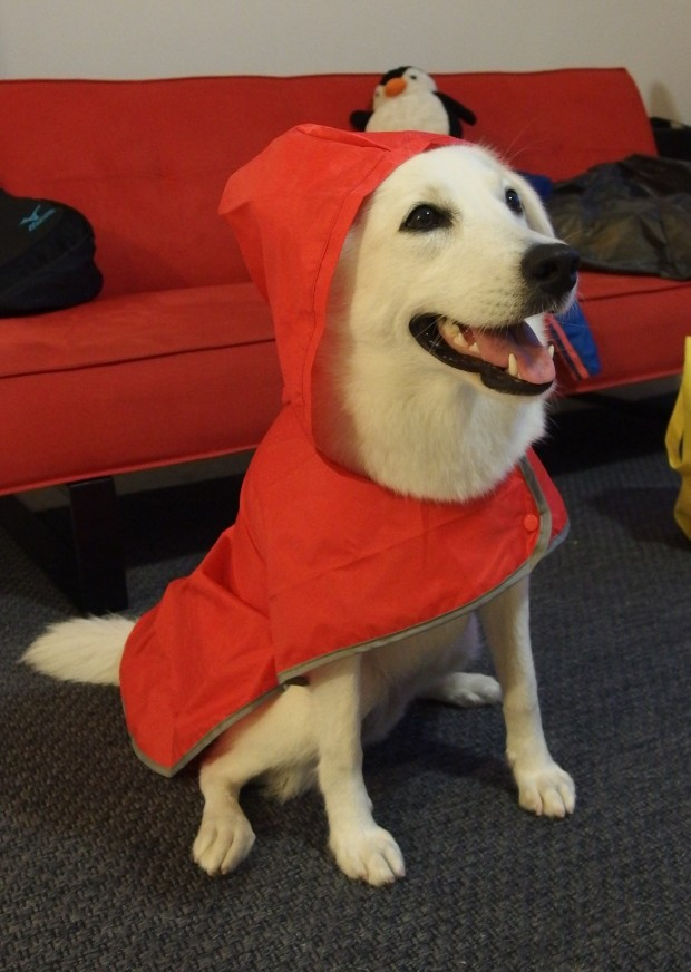 Macy in raincoat 1
